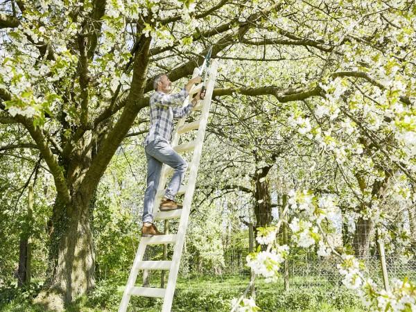 Intercon® Obstbaumleiter Elstar   9 Stufen 270 cm